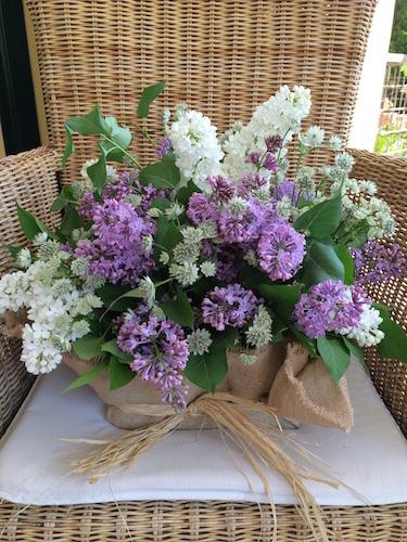 Img 4853 lilas blancas