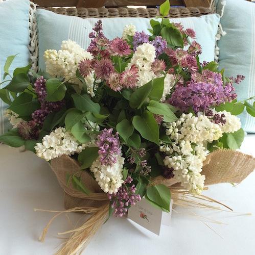 Fullsizerender blancos verdes violetas